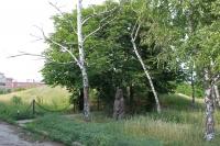 Сарматский курган, пр. Баклановский