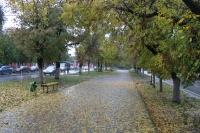 Осенняя аллея на Баклановском