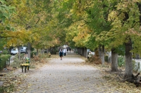 Осенняя аллея на улице Атаманской
