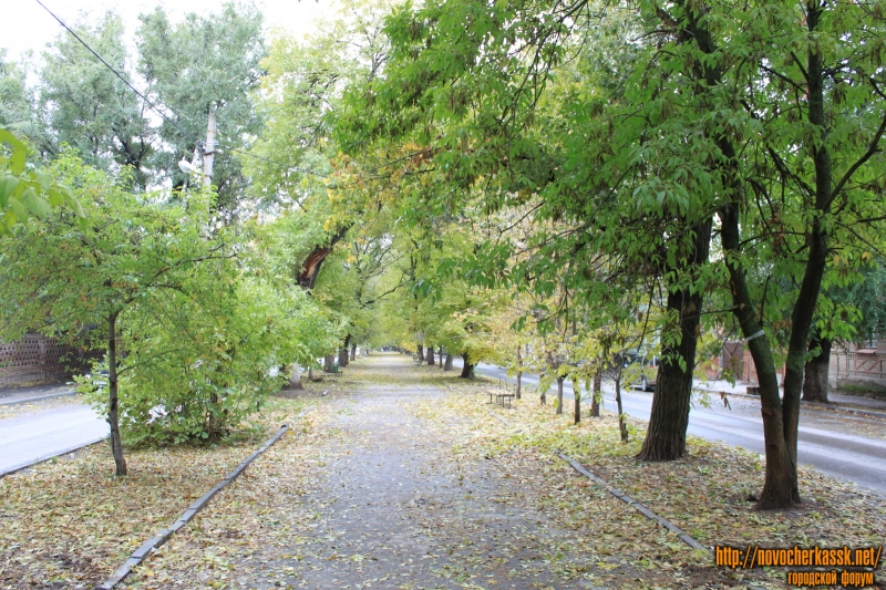 Осенняя аллея на улице Комитетской