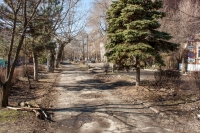 Аллея на улице Дубовского