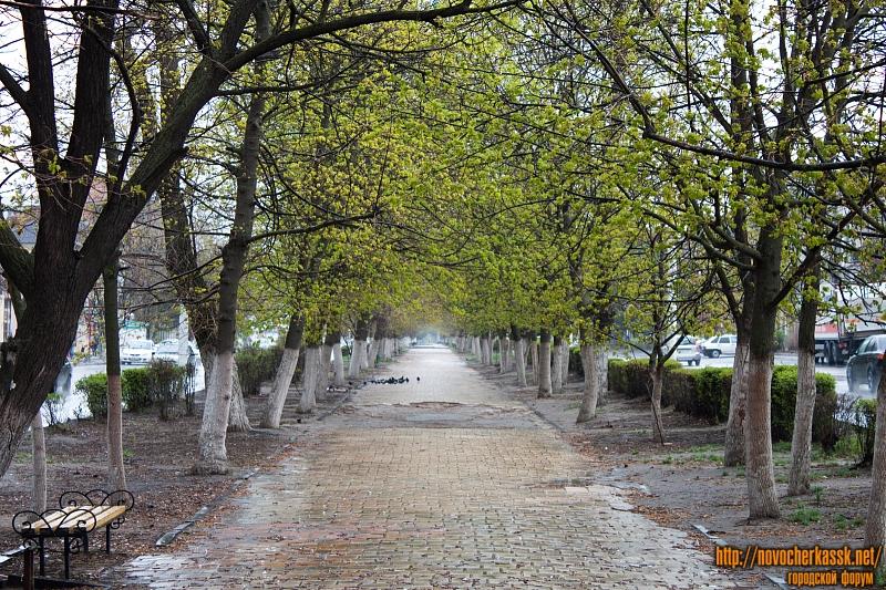 Аллея на Платовском проспекте