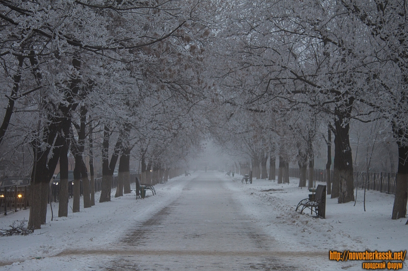 Аллея на проспекте Баклановском (вид в сторону ул. Крылова)