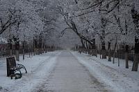 Аллея на проспекте Баклановском (вид в сторону пл. Юбилейной)