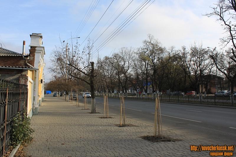 Новые деревья на проспекте Баклановском