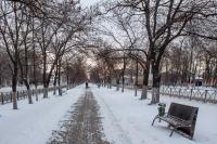 Аллея на проспекте Баклановском